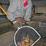 Ten Sleep Fish Hatchery employee